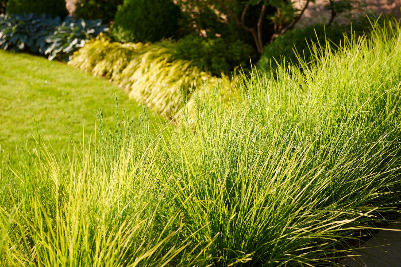 gartengestaltung gräser